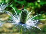 decouverte_fleurs_de_montagne_montagne_liberte.jpg