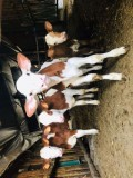 ferme-de-chagne-39427