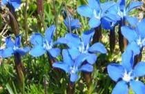 la-magie-des-plantes-9939